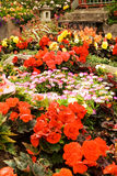 Flower bed garden Stock Images