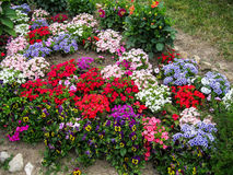 A flower bed in the garden. Royalty Free Stock Photos