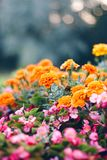 Flower bed in the garden with decorative flowers stock photo