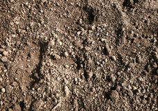 Flower bed garden soil. Stock Photography
