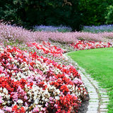 flower bed and green grass in the summer park Stock Images