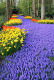 Flower bed in Keukenhof gardens Stock Photo