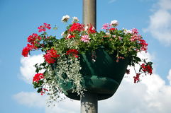 Flower bed   on a lamppost Stock Photography