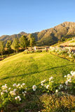 Flower bed and lawn against mountains Royalty Free Stock Image