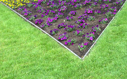 Flower bed in lawn. Plants with purple and yellow flowers in a bed in the garden with wooden border surrounded by lawn stock photography