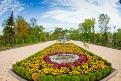 Flower bed with tagetes in the public garden. Flower bed in the middle of sidewalk area, tagetes and single little tree in the center, public garden, shot in stock images