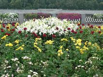 Flower bed in Moscow stock images