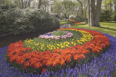 Flower bed of multicolored tulips in park Royalty Free Stock Photo