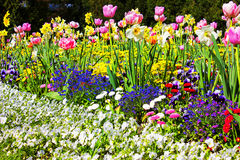 Flower Bed Royalty Free Stock Photos