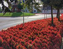 Flower bed near the roadway royalty free stock photos