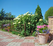 Flower bed and ornamental plants stock images
