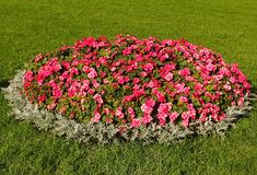 A flower-bed Stock Photos