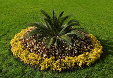 A flower-bed. In a park Royalty Free Stock Photo