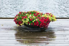 Flower bed with petunia. On the river bank stock images