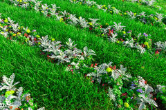 A flower bed! Royalty Free Stock Photography
