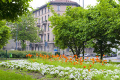 Flower bed with poppies in Milan city, Italy Royalty Free Stock Image