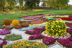 Flower bed in a shape of an apple with colorful chrysanthemums. Parkland in Kiev, Ukraine. Royalty Free Stock Photos