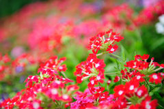 Flower bed in spring Royalty Free Stock Images