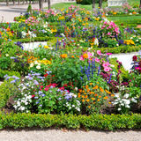 flower bed in the summer park Stock Images