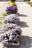 Flower-bed in sunny day Royalty Free Stock Photo