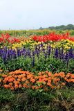 Flower bed of Takizawa Farm Royalty Free Stock Photography