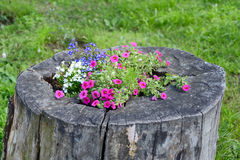 Flower bed in a tree stump Royalty Free Stock Photography