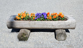 Flower bed in a tree trunk Royalty Free Stock Photos