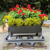Flower bed in the trolley Royalty Free Stock Image