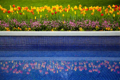 Flower bed of tulips and reflection in water. Beautiful flowers and reflection in pool Royalty Free Stock Images