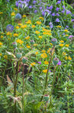 Flower bed of undemanding perennials Stock Photo