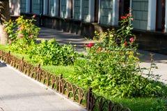 Flower bed in the urban landscape. Summer flower bed in the urban landscape near the building stock image