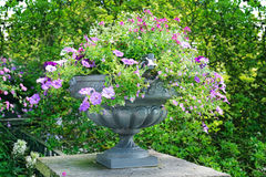 Flower bed in vase Royalty Free Stock Image