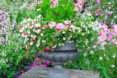 Flower bed in vase Stock Photography