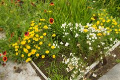 Flower bed and vegetable beds in the summer garden Stock Images