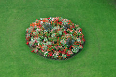 A flower-bed. View from above Royalty Free Stock Photos