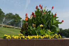 Flower-bed on Volga embankment in Volgograd Stock Images