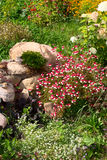 Flower bed with wild flowers and ornamental Stock Photos