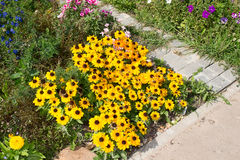 Flower bed with wild flowers and ornamental Royalty Free Stock Photography