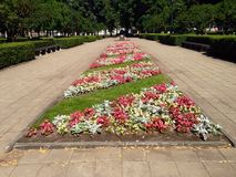 Flower beds in the Royalty Free Stock Photo