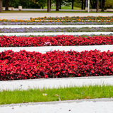 Flower beds Royalty Free Stock Images