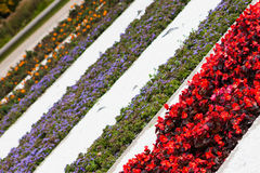 Flower beds Stock Photo