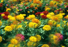 Flower Beds. A Garden bed full of flowers Stock Photography