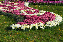 Flower beds with colorful chrysanthemums. Parkland in Kiev, Ukraine. Stock Image