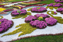 Flower beds with colorful chrysanthemums. Parkland in Kiev, Ukraine. Royalty Free Stock Photos