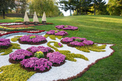 Flower beds with colorful chrysanthemums. Parkland in Kiev, Ukraine. Royalty Free Stock Images