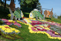 Flower beds with colorful chrysanthemums. Parkland in Kiev, Ukraine. Royalty Free Stock Image