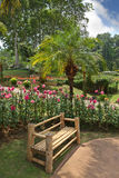 The flower beds and a comfortable bench Stock Images