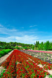 Flower Beds Royalty Free Stock Image