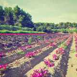 Flower Beds Royalty Free Stock Photography