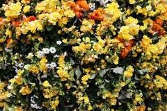 The flower beds in formal of garden. A flower beds in formal of garden Royalty Free Stock Image